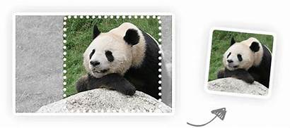 Compress Compression Resize Smart Tinypng Panda Tinyjpg