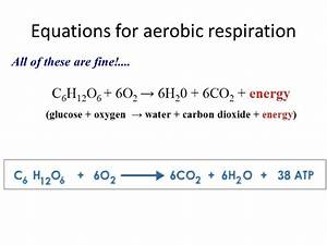 Word Equation For Anaerobic Cell Respiration In Humans ...