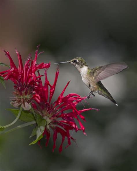 hanging baskets for hummingbirds pinterest the world s catalog of ideas