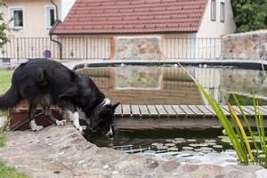 Hundeplanschbecken Selber Bauen : hundepool poolkauf oder diy tierischer badespa f r deinen hund ~ Markanthonyermac.com Haus und Dekorationen