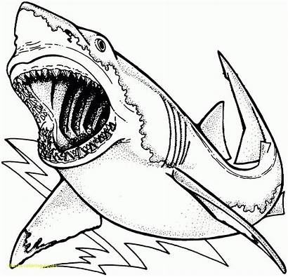 Shark Coloring Pages Scary Printable Sharks Getcolorings
