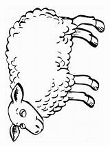 Lamb Coloring Pages Animals Printable Recommended Colors Mycoloring sketch template