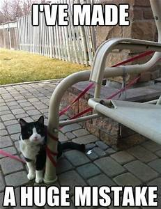 Funny Cat Pics with Captions - 60 pictures! - funnycatsgif.com
