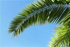 überwintern Von Palmen : winterharte palmen pflege im winter ~ Michelbontemps.com Haus und Dekorationen