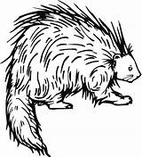 Porcupine Coloring Pages Printable Porcupines Drawing Drawings Line Animal Preschool Crafts Animals Clipart Colouring Cape Letters American Cartoons Category Print sketch template