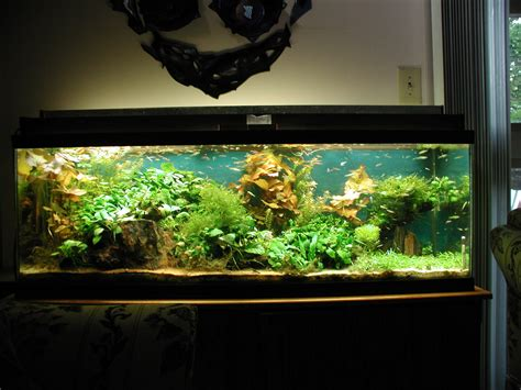 cheap aquariums for sale decorations big fish tanks for sale with exciting and uniquely fluorescent look tenchicha