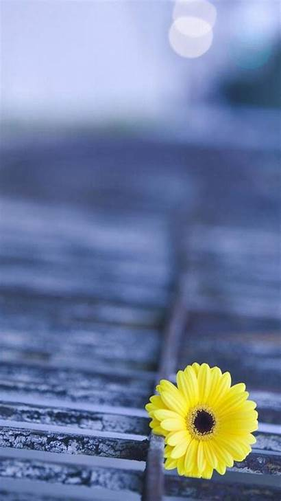 Samsung Mobile Galaxy Wallpapers J2 Flower Backgrounds