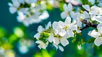 Flowers Apple Wallpapers 1280
