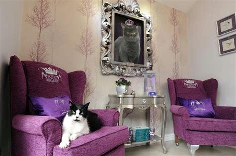 Luxury Hotel Room For Cat  Bored Panda