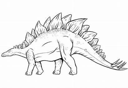 Stegosaurus Dinosaur Coloring Pages Drawing Dinosaurs Draw