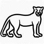 Cougar Leopard Icon Jungle Cat Lion Jaguar