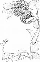 Zinnia Coloring Flowers Flower Supercoloring Drawing Printable Categories sketch template