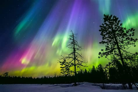 Snow Lights by Finland Winter Sky Northern Lights Snow Forest