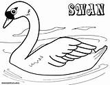 Swan Coloring Pages Colorings sketch template