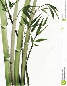 Watercolor Painting Of Bamboo Stock Illustration ...