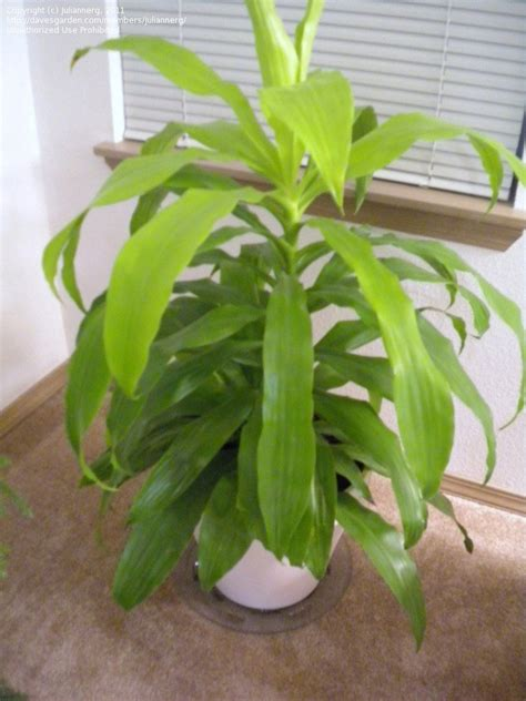 plant identification i need help identifying my house