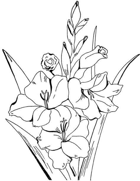 adult flowers coloring page gladiolus  graphics fairy