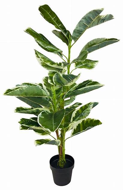 Artificial Ficus Rubber Plant Indoor Plants Potted