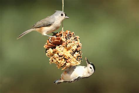 Identify Backyard Birds by Who Are You Identifying Backyard Birds Feed