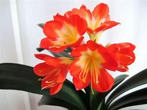 Pflegeleichte Zimmerpflanzen Mit Blüten : robuste zimmerpflanzen beliebte pflegeleichte topfpflanzen ~ Eleganceandgraceweddings.com Haus und Dekorationen