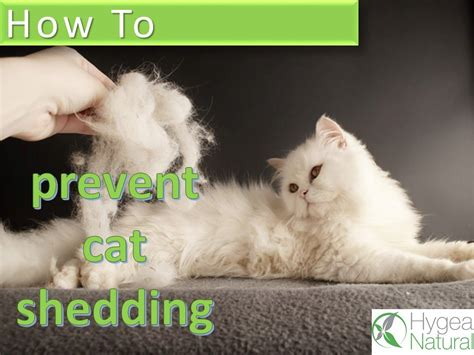 how to get your cat to stop shedding how to prevent cat shedding