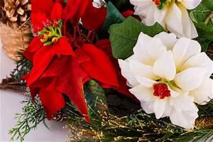 Blumen Zu Weihnachten : blumen zu weihnachten online versenden weihnachtsblumen und adventsgestecke g nstig online ~ Eleganceandgraceweddings.com Haus und Dekorationen