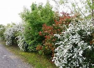 Quand Tailler Les Arbustes De Haies : id e de jardin cr er une haie fleurie et parfum e ~ Dode.kayakingforconservation.com Idées de Décoration