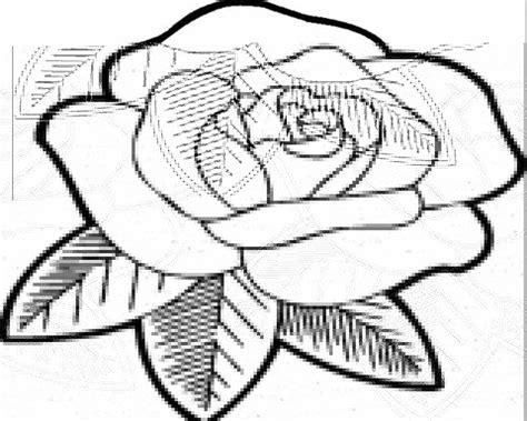 gambar bunga melati yang belum diwarnai