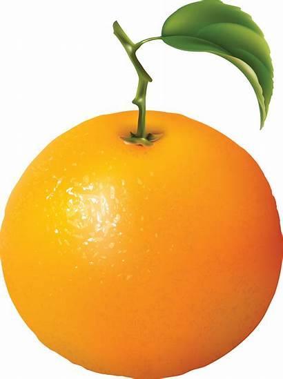 Orange Oranges Clipart Clip Fruit Transparent Graphics