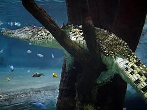 Wohnung Unter Wasser Was Tun : tierpark hagenbeck tropen aquarium ~ Markanthonyermac.com Haus und Dekorationen