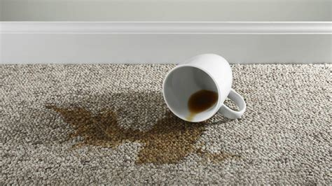 Why Are Coffee Stains So Difficult To Remove From Carpets? How Do I Measure My Carpet 1st Place Cleaning Denver Home Comfort Carpets Alexandria Dubai For Stairs Cheap Steam Perth Best Companies In Northern Virginia Royal Treatment Aurora Il