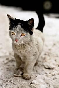 Protège Canapé Chat : au secours mon chat fait ses griffes sur le canap ~ Premium-room.com Idées de Décoration