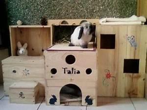 Maison Pour Lapin : comment faire un bunny comdo ~ Premium-room.com Idées de Décoration