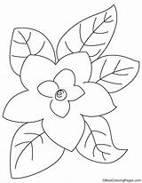 Magnolia Coloring Leaves Pages Bestcoloringpages sketch template