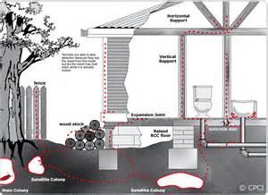termite delhi termite noida termite treatment services