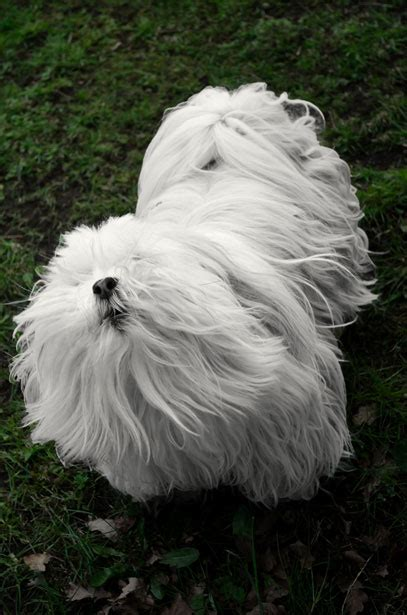white dog  stock photo public domain pictures