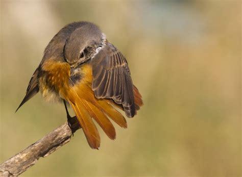 steve mills bird photography