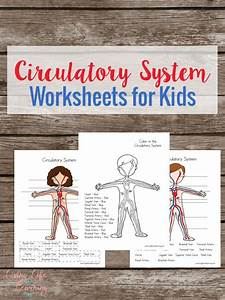 Diagram Of Human Circulatory System For Kids