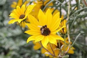 Native, Plants, And, Pollinators
