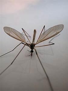 Was Tun Gegen Mücken Im Zimmer : was macht ihr gegen stechm cken im schlafzimmer ot forum ~ Lizthompson.info Haus und Dekorationen