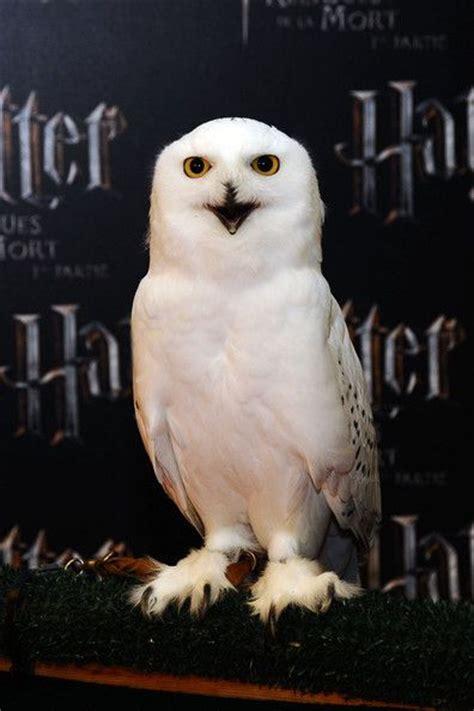 Harry Potter Wallpaper Hedwig Owl by Best 25 Harry Potter Owl Ideas On Hedwig