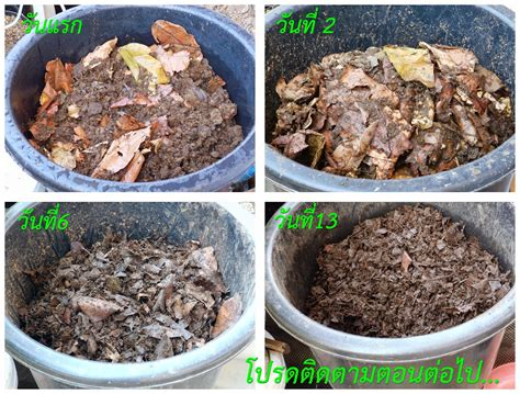 ลุงบี ปลูกผักอินทรีย์: ปุ๋ยหมักอินทรีย์ในกะละมัง