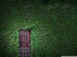 Green Wall Window #6983078