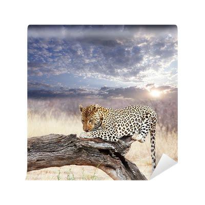 Fliesenaufkleber Leopard by Fototapete Leopard Pixers 174 Wir Leben Um Zu Ver 228 Ndern