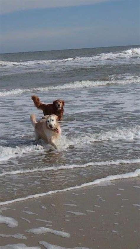 legged four fun summertime beach