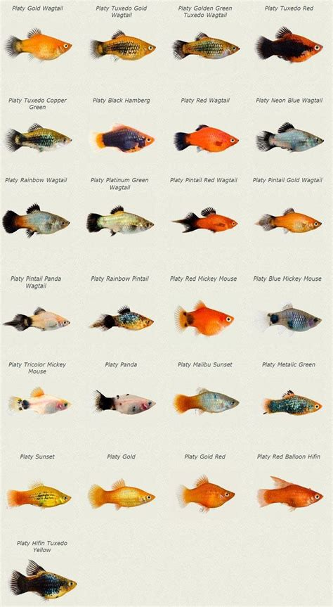 type  aquarium fish freshwater aquarium fish