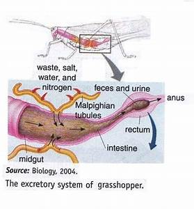 Excretory system in Animal ~ New Science Biology