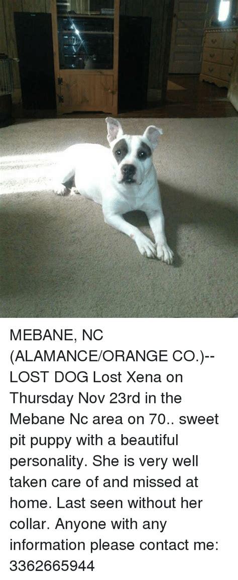Orange Dog Meme - mebane nc alamanceorange co lost dog lost xena on thursday nov 23rd in the mebane nc area on
