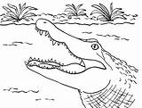 Alligator Coloring Pages Printable Crocodile Alligators Head Gator Printables Sheet Sheets Template Print Display Collection Sauti Pata Cute Drawing Samanthasbell sketch template