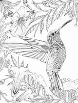 Coloring Pages Adult Hummingbird Printable Bird Adults Colouring Sheets Mandala Books Pattern Hummingbirds Birds Animals Drawing Drawings Animal Grown Turtle sketch template